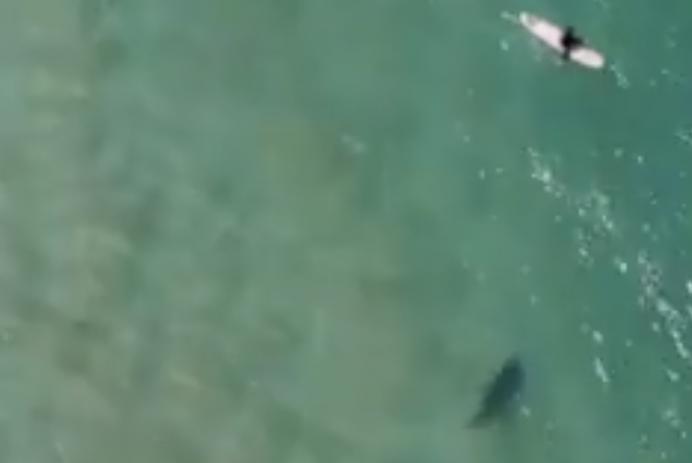 Drone spots shark