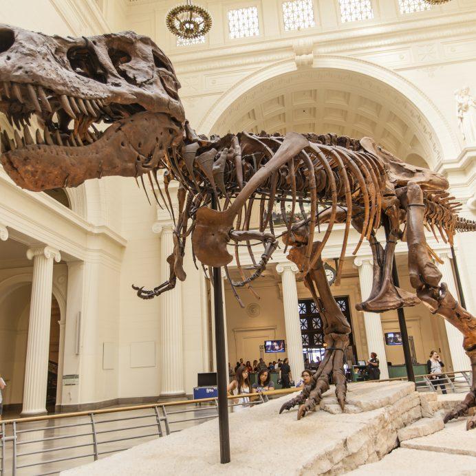 Dinosaur called Sue on exhibit
