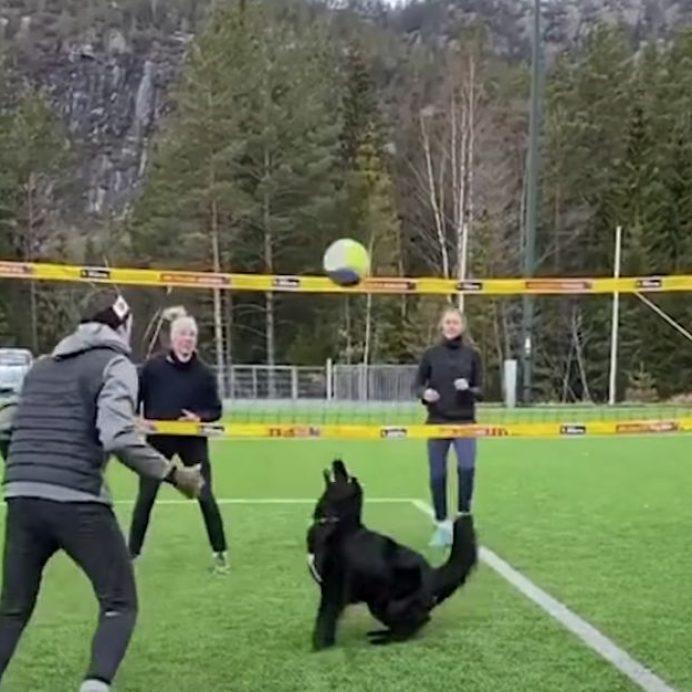 volleyball dog