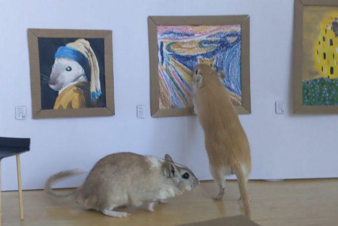 gerbil art museum