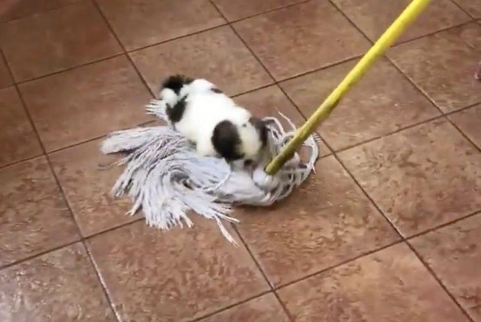 dog riding mop