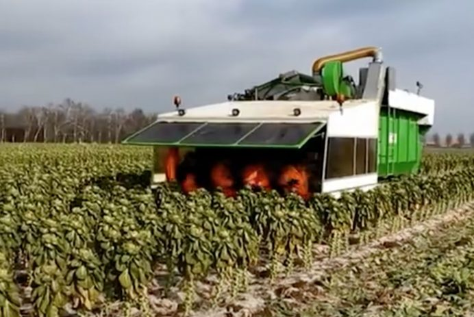 tumoba brussels sprouts machine