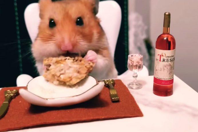 Hamster eating dinner