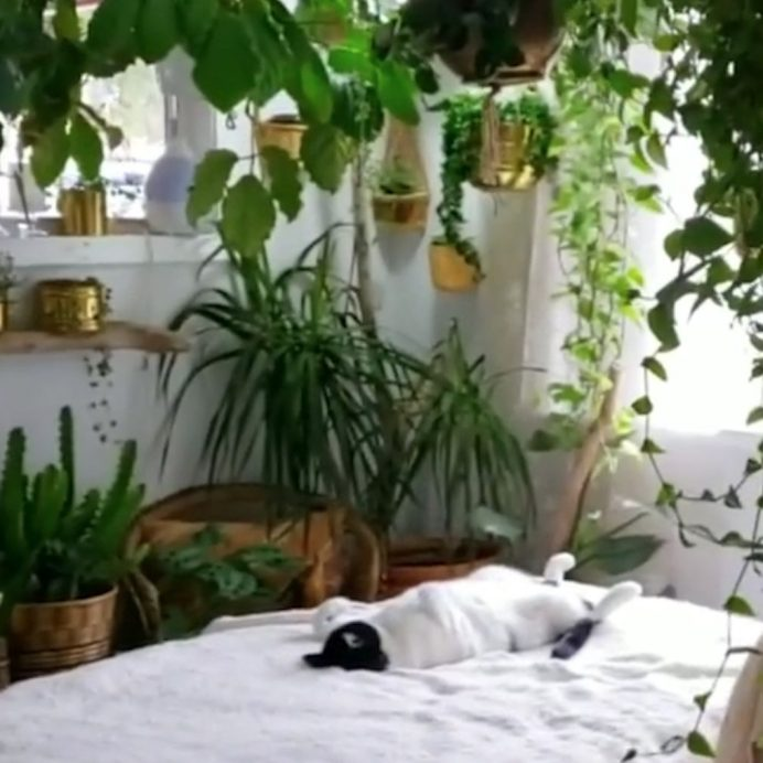 bedroom jungle
