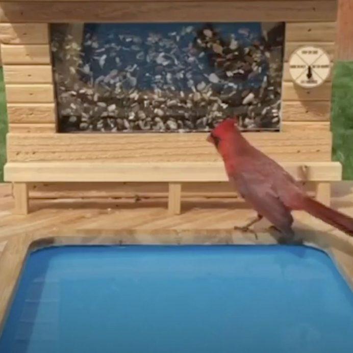 Bird Resort
