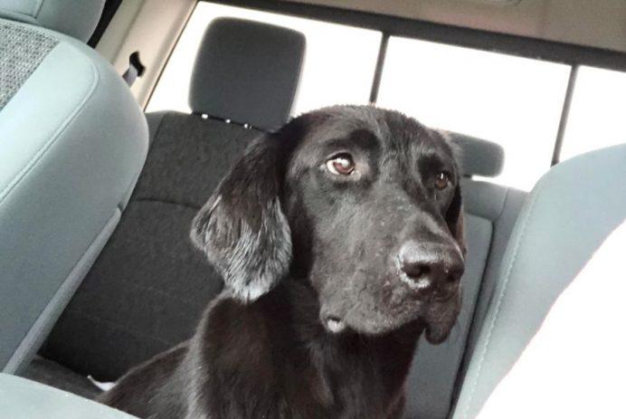 stray dog reddit