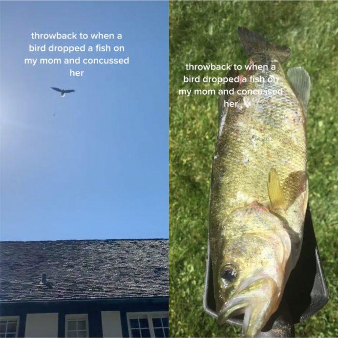 tiktok fish