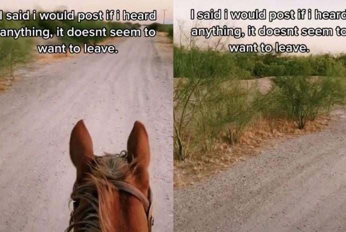 Horse trail tiktok