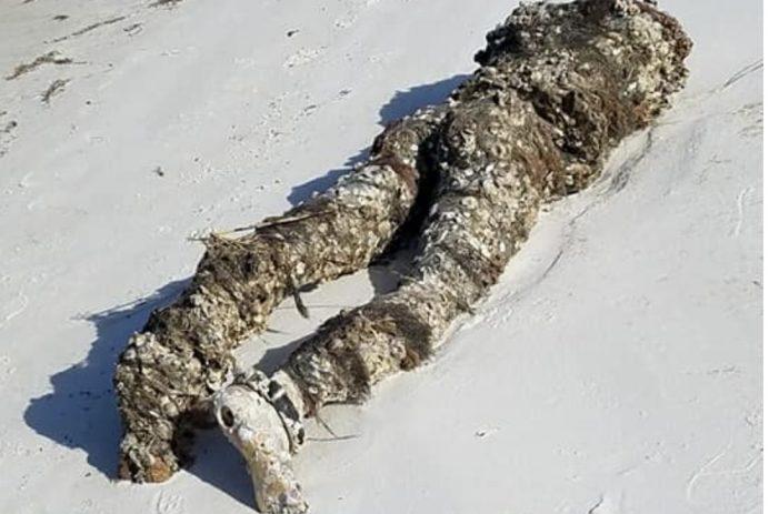 florida fake headless body