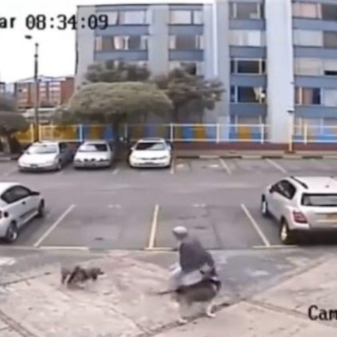 off-leash dogs