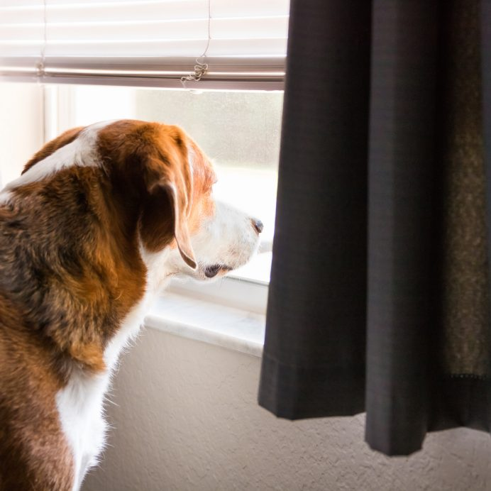 Dogs separation anxiety tips