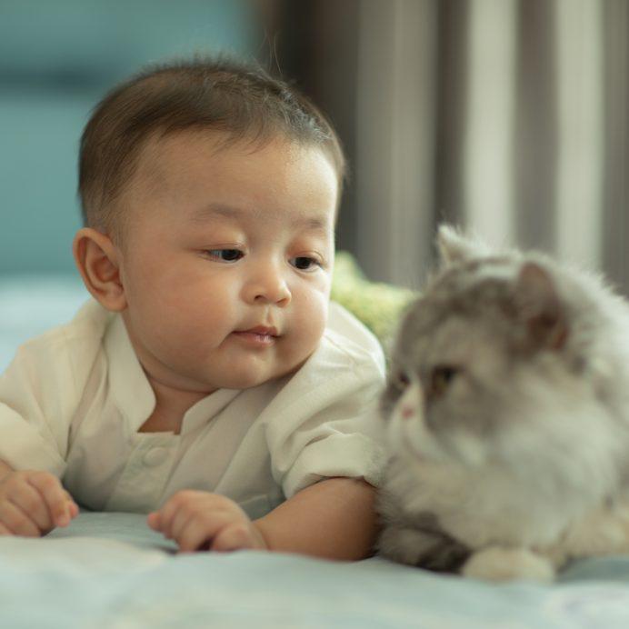 prepare cat for newborn baby