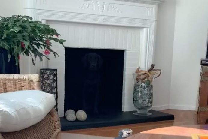 dog optical illusion fireplace