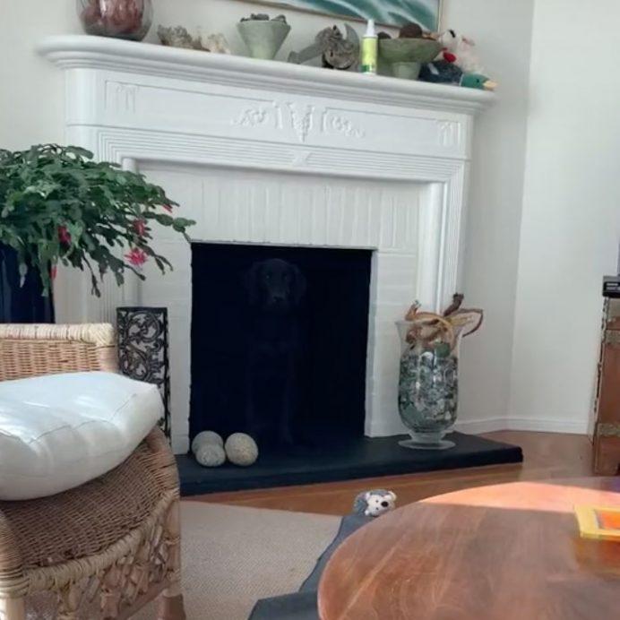 dog optical illusion fireplace