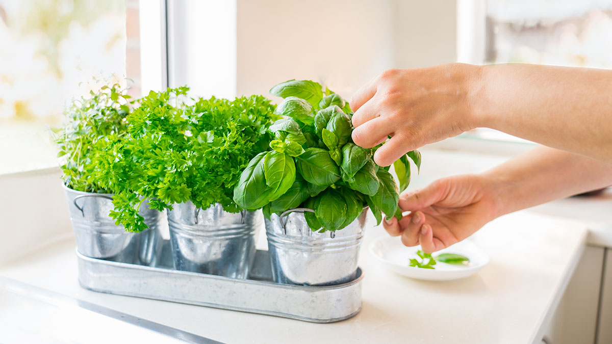 6 essential herbs every home chef needs — and how to use them