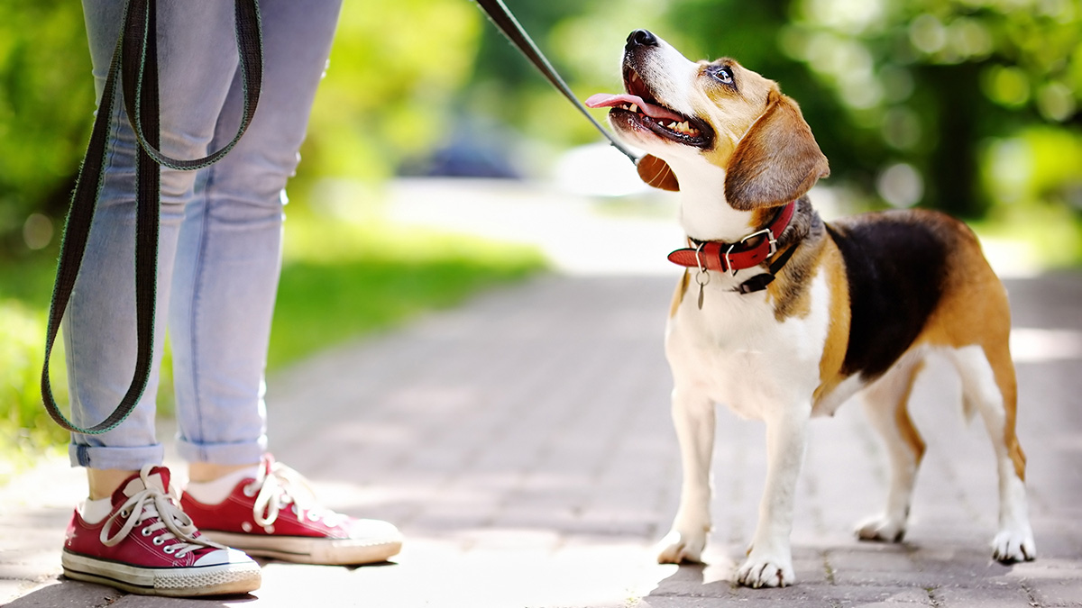 Dog trainer reveals what not to say to your family pet