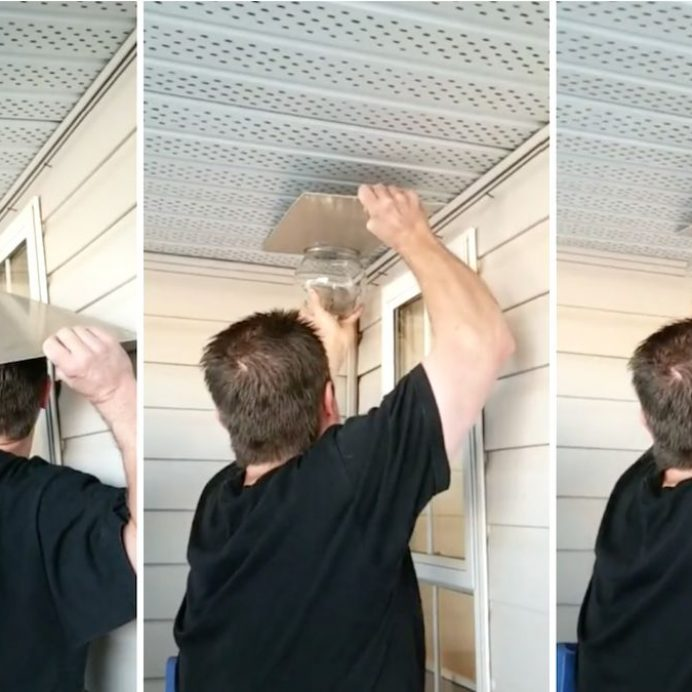 dad removes wasp nest