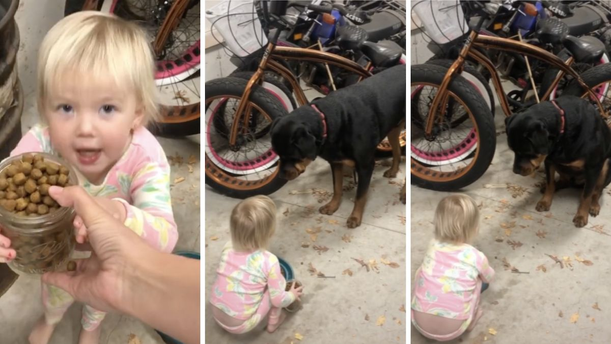 Toddler girl commands 160-pound Rottweiler and he completely obeys: 'He respects her'